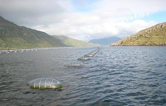 JFC Marine Double Line Mussel Floats