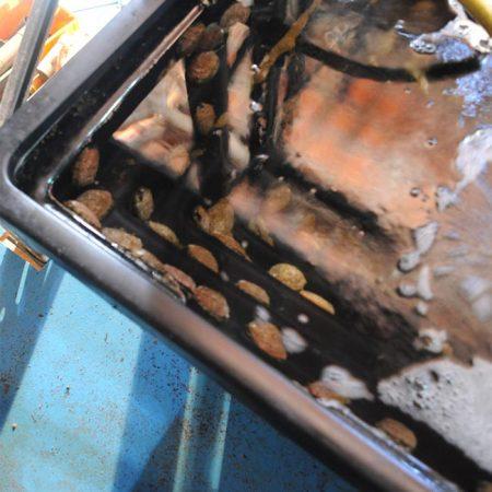 Marine abalone tray